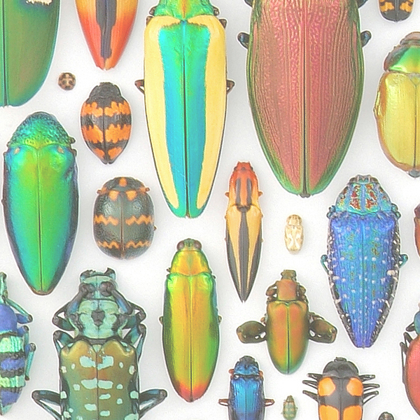Digital Woven Beetles