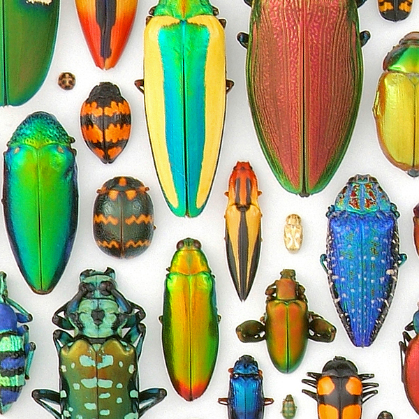 Digital Hi-Res Beetles